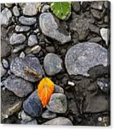 A Sign Of Fall Acrylic Print