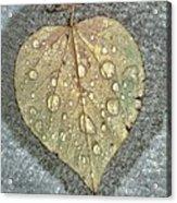 A Simple Leaf Acrylic Print