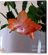 A Single Blossom Acrylic Print