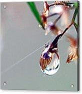 A Single Dewdrop Acrylic Print