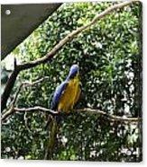 A Single Macaw Bird On A Branch Inside The Jurong Bird Park Acrylic Print