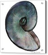 A Single Shell Acrylic Print