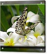 A Sip Of Nectar Acrylic Print