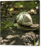 A Snail's Pace Acrylic Print