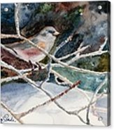 A Snowy Perch Acrylic Print