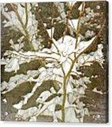 A Snowy Tree Acrylic Print