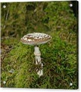 A Sole Mushroom Acrylic Print