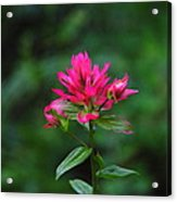 A Sole Wildflower Acrylic Print