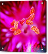 A Splash Of Colour Acrylic Print