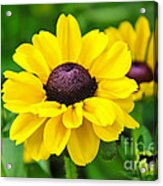 A Splash Of Sunshine Acrylic Print