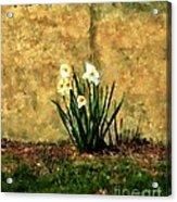 A Spot Of Spring Acrylic Print