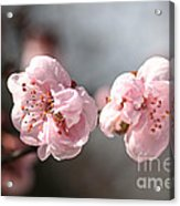 A Spring Dream Acrylic Print