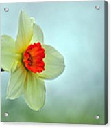 A Spring Greeting Acrylic Print