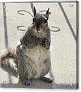 A Squirrel Known As Chippy Acrylic Print