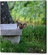 A Squirrel's Day Out Acrylic Print