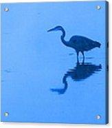 A Stalking Heron Acrylic Print