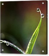 A State Of Graceful Acrylic Print