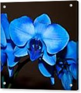 A Stem Of Beautiful Blue Orchids Acrylic Print