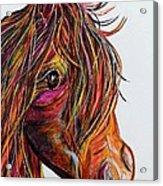 A Stick Horse Named Amber Acrylic Print