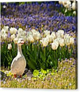 A Stone Duck Statue  Acrylic Print