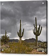 A Storm In The Sonoran Desert Acrylic Print