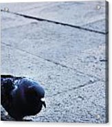 A Stroll In The Piazza  Acrylic Print