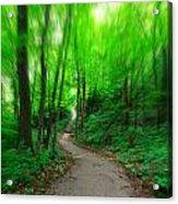 A Summer Trail Acrylic Print