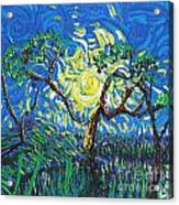 A Sunny Day For The Tree Acrylic Print