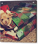 A Sweet Christmas Surprise Acrylic Print by Laurie Search