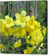 A Taste Of Yellow Acrylic Print