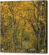 A Teton Autumn Acrylic Print