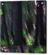 A Thin Veil Acrylic Print