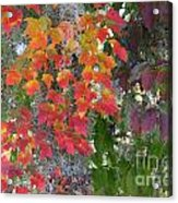 A Touch Of Autumn Acrylic Print