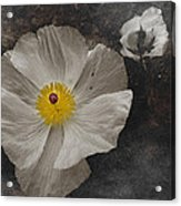 A Touch Of Color - Poppy Acrylic Print