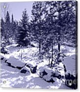A Touch Of Snow In Lavender Acrylic Print