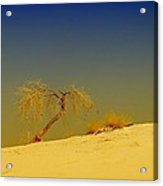 A Tree At White Sands Acrylic Print
