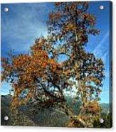 A Tree In Arcadia - Greece Acrylic Print