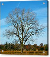 A Tree In Fall... Acrylic Print