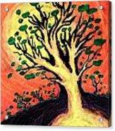 A Tree Is Born Acrylic Print by David Condry