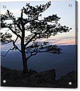A Tree Of Mountains Acrylic Print