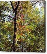 A Tree's Life Acrylic Print