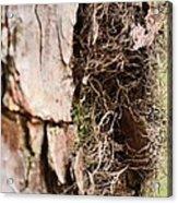 A Treetrunk Abstract Acrylic Print
