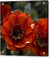 A Trio Of Red  Acrylic Print