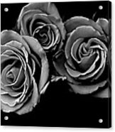 A Trio Of Roses Acrylic Print