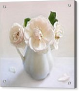 A Trio Of Pale Pink Vintage Roses Acrylic Print