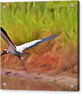 A Twig For Her Nest Acrylic Print