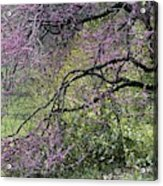 A View Of A Blooming Redbud Tree Acrylic Print