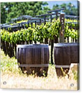 A Vineyard With Oak Barrels Acrylic Print