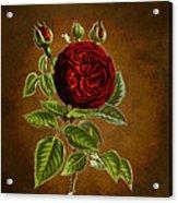 A Vintage Rose Wonder Acrylic Print