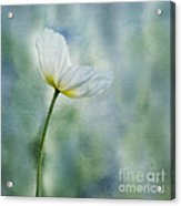 A Vision Of Delight Acrylic Print